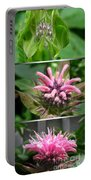 From Bud To Bloom - Bee Balm Named Panorama Pink Portable Battery Charger