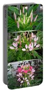 From Bud To Bloom - Cleome Named Pink Queen Portable Battery Charger