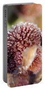 Frozen Dew Drops Melt From Canna Lily Seed Pods Portable Battery Charger