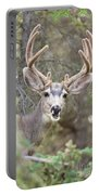 Funny Mule Deer Buck Portrait With Velvet Antler Portable Battery Charger