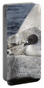 Galapagos Seagull And Her Chick Portable Battery Charger