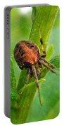 Genus Araneus Orb Weaver Spider - Brown And Orange Portable Battery Charger