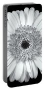 Gerbera Daisy Monochrome Portable Battery Charger by Adam Romanowicz