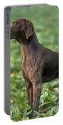 German Short-haired Pointer Portable Battery Charger
