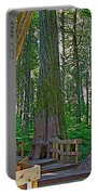 Giant Cedar Grove On Giant Cedars Trail In Mount Revelstoke Np-bc Portable Battery Charger