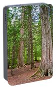 Giant Cedars On Trail Of The Cedars In Glacier Np-mt Portable Battery Charger
