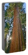 Giant Sequoia Trees Of Tuolumne Grove In Yosemite National Park. Portable Battery Charger