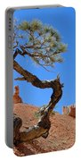 Gnarled Pine In Bryce Canyon Utah Portable Battery Charger