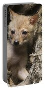 Golden Jackal Canis Aureus Cubs 2 Portable Battery Charger