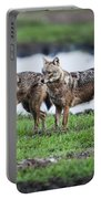 Golden Jackal Canis Aureus Portable Battery Charger