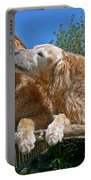 Golden Retriever Dogs The Kiss Portable Battery Charger