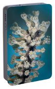 Gorgonian Portable Battery Charger