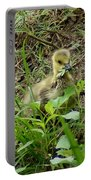Gosling Chewing On Some Grass Portable Battery Charger