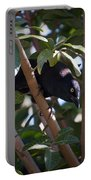 Grackle Stare Portable Battery Charger