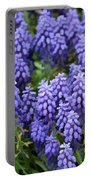Grape Hyacinth At Thanksgiving Point - 1 Portable Battery Charger
