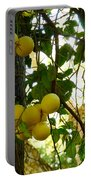 Grapefruits Portable Battery Charger