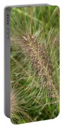 Grasses At Spaulding Pond Portable Battery Charger