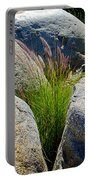 Grasses In Oasis On Borrego Palm Canyon Trail In Anza-borrego Desert Sp-ca Portable Battery Charger