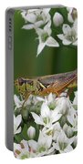 Grasshopper On Garlic Chives Portable Battery Charger