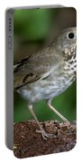 Gray-cheeked Thrush Catharus Minimus Portable Battery Charger