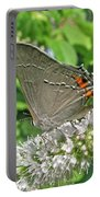 Gray Hairstreak Butterfly - Strymon Melinus Portable Battery Charger