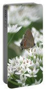Gray Hairstreak On White Blossoms Portable Battery Charger