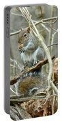 Gray Squirrel - Sciurus Carolinensis Portable Battery Charger