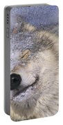 Gray Wolf Canis Lupus Shaking Snow Off Portable Battery Charger