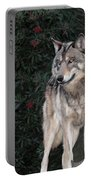 Gray Wolf Endangered Species Wildlife Rescue Portable Battery Charger