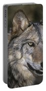 Gray Wolf Portrait Endangered Species Wildlife Rescue Portable Battery Charger