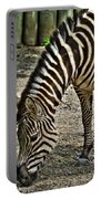 Grazing Zebra At The Buffalo Zoo 2 Portable Battery Charger