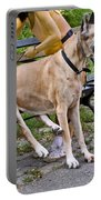Great Dane Sitting On Park Bench Portable Battery Charger