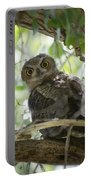 Great Horned Owl Fledgling  Portable Battery Charger