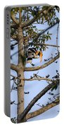 Great Indian Hornbill Portable Battery Charger