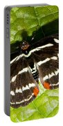 Grecian Shoemaker Butterfly Portable Battery Charger