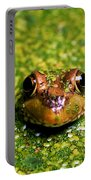 Green Frog Hiding Portable Battery Charger
