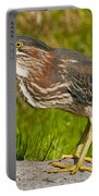 Green Heron Pictures 449 Portable Battery Charger
