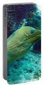 Green Moray Eel With Cleaning Fish Portable Battery Charger