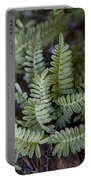 Green Resurrection Fern Air Plant Portable Battery Charger