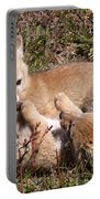 Grey Fox Kitts At Play Portable Battery Charger