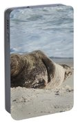 Grey Seal Pup On Beach Portable Battery Charger