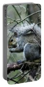Grey Squirrel Portable Battery Charger