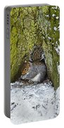 Grey Squirrel With Its Food Store Portable Battery Charger