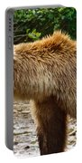 Grizzly Bear Very Close In Moraine River In Katmai National Preserve-ak Portable Battery Charger