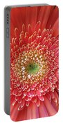 Groovy Gorgeous Gerber Portable Battery Charger