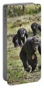 group of Common Chimpanzees running Portable Battery Charger