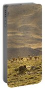 Guanaco Herd, Argentina Portable Battery Charger
