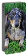 Gus The Dappled Miniature Dachshund Portable Battery Charger