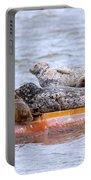 Harbour Seals Lounging Portable Battery Charger