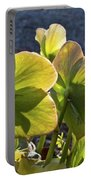 Helleborus Backlight Blossoms 2 Portable Battery Charger